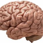 Možgani tvorijo um