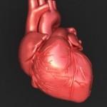Srce, lahko varujemo