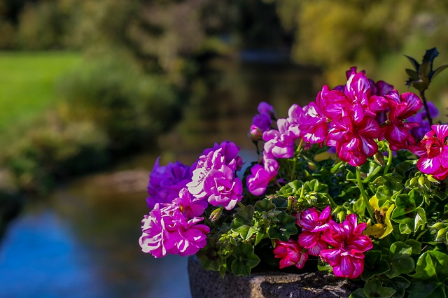 Visoka korita za rože so zelo moderna